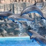 名古屋港水族館のチケット料金(入場料)の割引券やクーポンは?