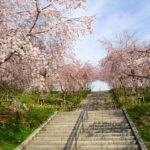 名古屋のお花見スポットおすすめランキング2019!桜の開花や満開の時期もまとめました!
