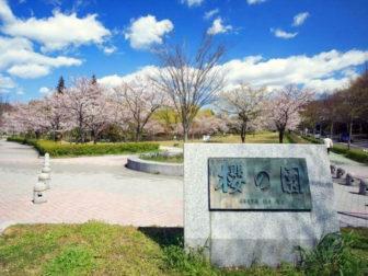 平和公園の桜の園