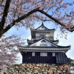 浜松城公園の桜まつり