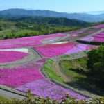 茶臼山の芝桜まつり2019の車でのアクセス方法や駐車場まとめ!渋滞情報は?