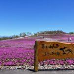 茶臼山の芝桜まつり2019の見頃や開花状況は?ライトアップ情報も!