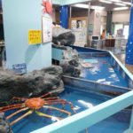 蒲郡市竹島水族館に名古屋から車でアクセスする方法を地図で紹介!無料駐車場はある?