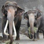 金沢動物園の入園料金の割引券やクーポンまとめ!JAFやコンビニがお得?